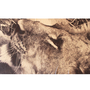 Silk Scarf with Photographic Print of Lioness